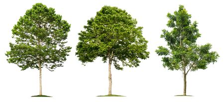 Tree collection on a white background for graphic design or gardening work.Beautiful plants found in tropical rainforests.