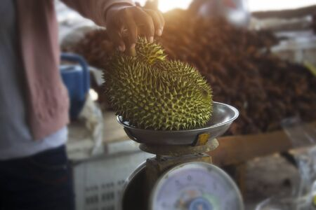 Durian is placed on the scales to determine the price at the market.Tropical fruits that people around the world like to eat.