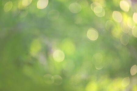 Bokeh nature verte, arrière-plan subtil dans un style abstrait pour la conception graphique ou les fonds d'écran