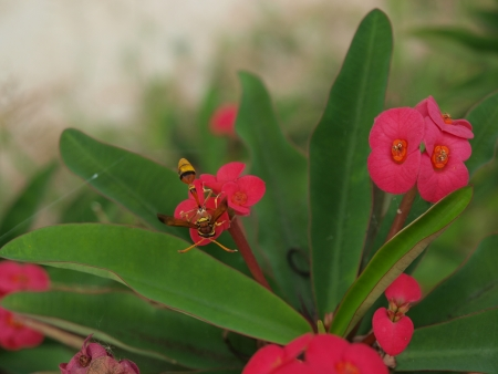 wasp red flower Stock Photo - 21800943