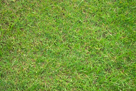 The texture of the grass. Stock Photo - 13449443