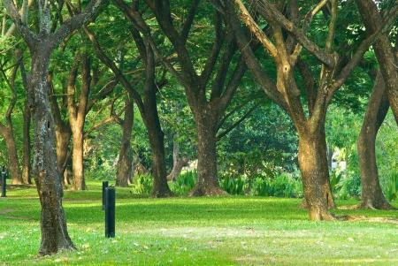 Big trees at the park