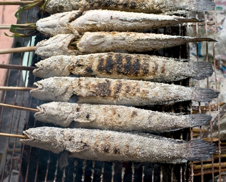snake head fish: pesci testa di serpente con rivestimento sale sul fuoco griglia