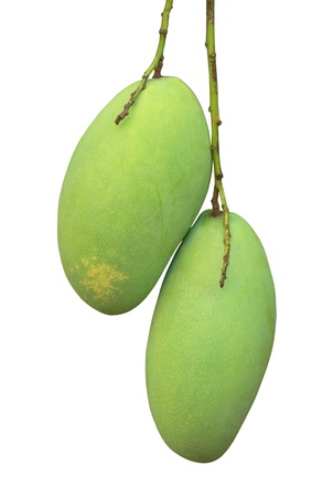 green mango on white background photo