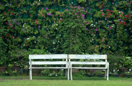 old bench with wall of vibrant flower