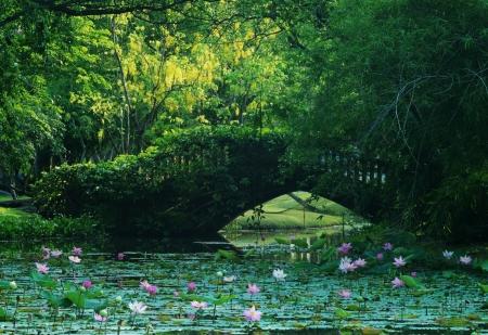 공원에 연못 스톡 콘텐츠 - 20344074