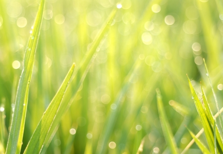 bokeh of the rice field after rain drop Stock Photo