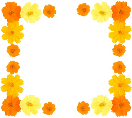 Flower frame with yellow flowers isolated on white background, Marigold flower photo