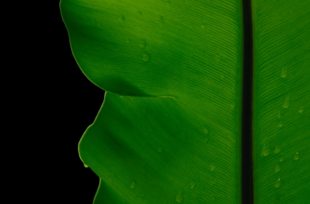 Fresh Leaves isolated on black  photo
