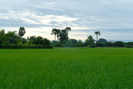 paddy field, north of thailand Stock Photo