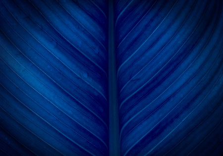 abstract background with colored leaf texture Stock Photo