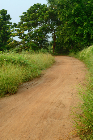 rural road through green fields photo