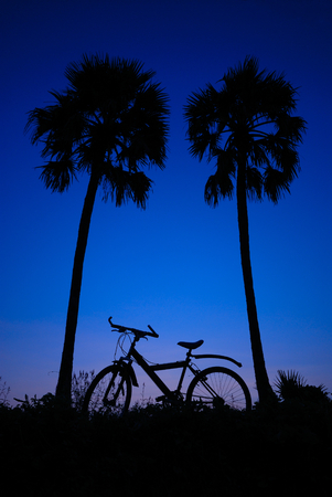 sugar palm: tropical sunrise with sugar palm and bicycle