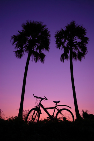 tropical sunrise with sugar palm and bicycle