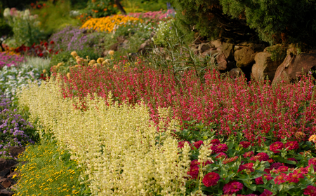 flowerbeds: blossoming flowerbeds in park
