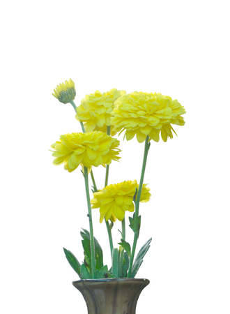 bouquet of yellow flower isolated on white background