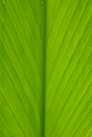 leaf water: close up of green leaf with drops of water
