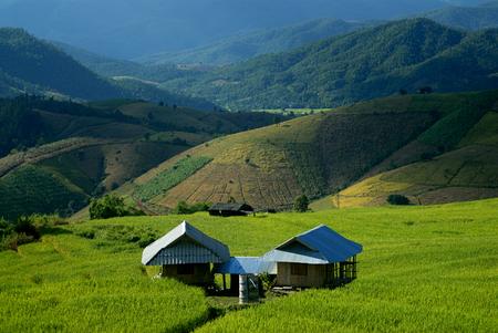 pa: Green terraced rice field in Pa Pong Pieng. Chiang Mai ,Thailand.
