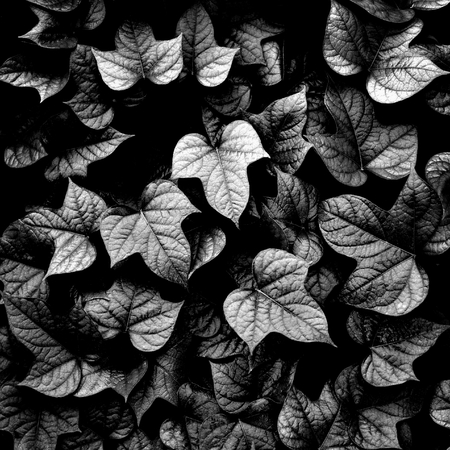 leaves background ,black and white