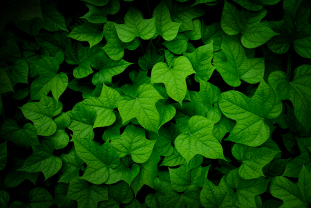 vignette: green leaf texture with vignette Stock Photo