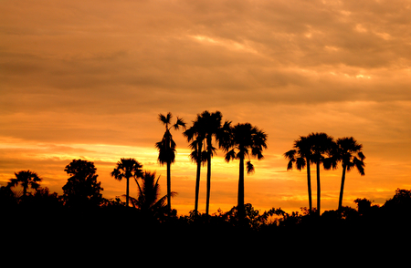 Sunrise with dark clouds and silhouettes of palm trees.