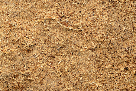 Wood sawdust closeup for background. Stock Photo