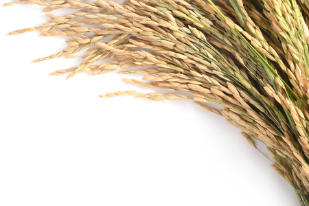 Paddy rice seed on white background.