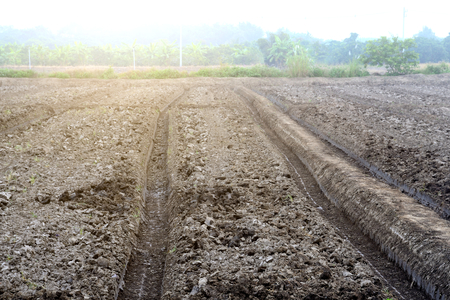 Soil with parallel rows of dirt ready for planting. In the countryside of Thailand