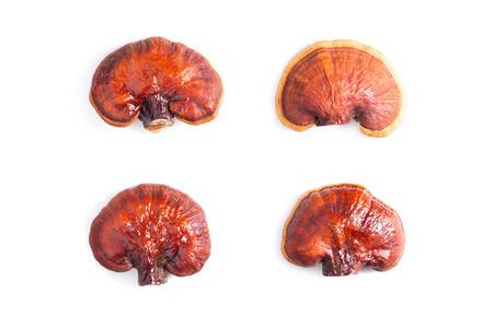 Lingzhi mushroom on white background (Ganoderma Lucidum). Chinese traditional medicine and nutritive value
