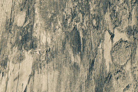 Texture of old wood skin.Vintage style color.