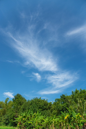 Green trees with fluffy white clouds and blue sky. 스톡 콘텐츠