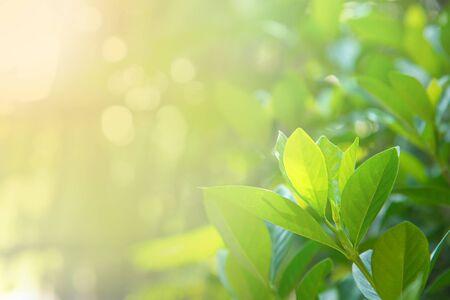 Fresh green leaves against morning light. Selective focus.