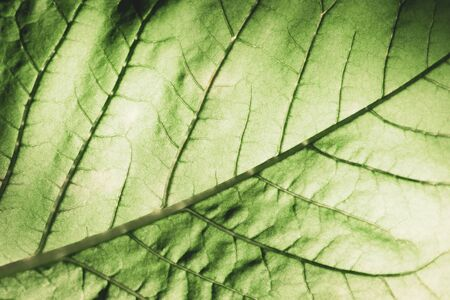Macro photo of green leaf texture detail. Vintage color tone. 免版税图像