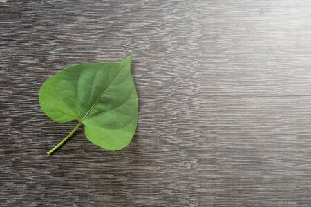 Heart shape green leaf on wooden floor background. 免版税图像