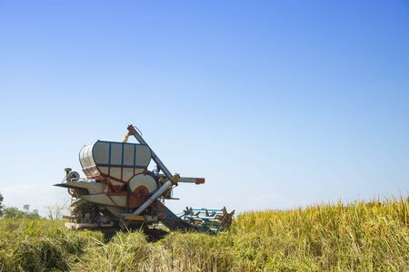 Combine harvester on rice field with blue sky in sunny day. Banque d'images