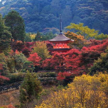 twentysomething: Kiyomizu-dera in autumn season