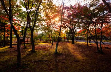 japanese tea garden: Autumn Japanese garden with maple in Kyoto,Japan