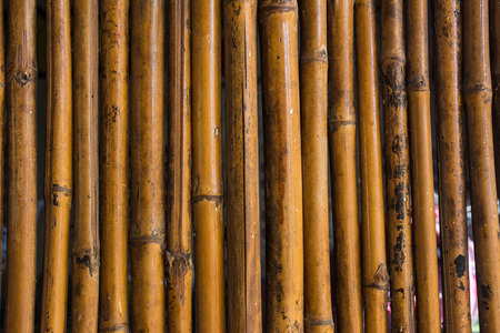 asian house plants: Bamboo wall