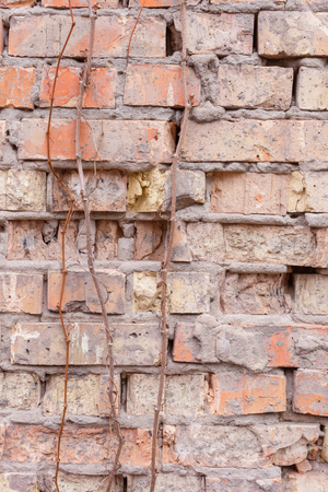 dumps: Texture of old brick wall. Dumps plaster, broken bricks. Branches of wild grapes. Daylight