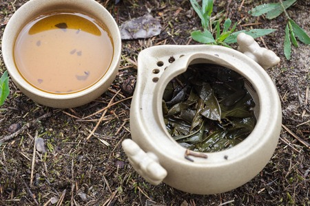 forest tea: Tea set on the ground in the forest. Teapot and cups of Yixing clay.