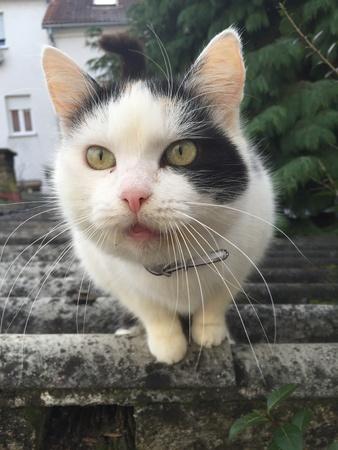 The cat Stok Fotoğraf