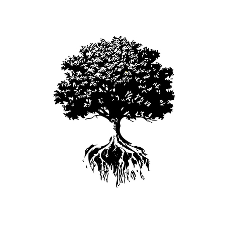 botany: Trees And Roots silhouette. Oak And Olive Trees.