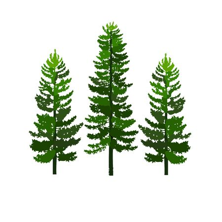green pines tree isolated on white background vector