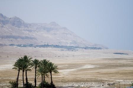 palms in desert near Dead sea photo