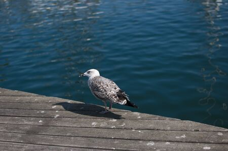 Seagull sits on the dock against blue sea Imagens