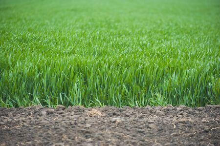 Green grass next to plowed land, can be used as a background