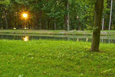 despacio: Puesta del sol a través de los árboles y un pequeño arroyo