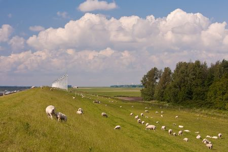 Sheep and windmill at a dike in the Netherlands photo
