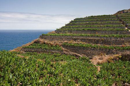 Banana plantations at the coast of La Palma, Canary Islands photo