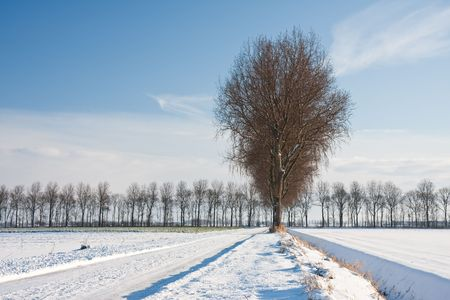Wintertime in the farmland of the Netherlands photo